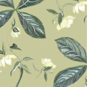 """Nine Muses """"Helebore"""" in Light Olive"""